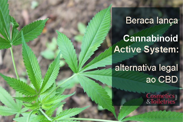Beraca lança Cannabinoid Active System: alternativa legal ao CBD