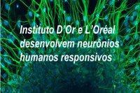 Instituto D'Or e L'Oréal desenvolvem neurônios humanos responsivos