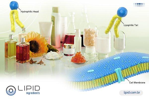 Conheça as vantagens únicas dos fosfolipídios